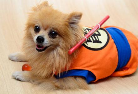 Pawsplay Doggie Show!